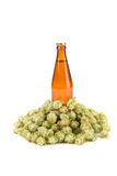 Beer bottle and hop flowers. Stock Image