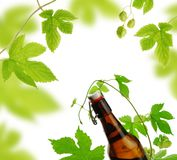 Beer bottle and hops royalty free stock photos