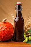 Beer bottle, pumpkin  and spikes of barley Stock Photos