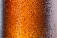 Beer bottle with water drops Stock Images