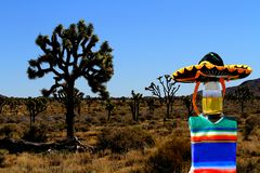 Cinco de Mayo beer bottle at Joshua Tree, California. This beer bottle is wearing a sombrero and poncho and is hanging out with Joshua trees.  This photo would