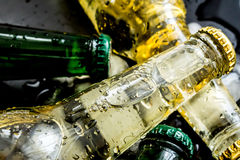 Beer in bottles with bubbles in ice cubes closeup Stock Photography