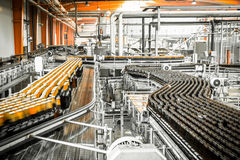 Beer bottles on the conveyor belt Stock Photography