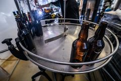 Beer bottles on conveyor Stock Images