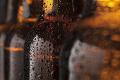 Beer bottles. The group of wet bottles of beer Royalty Free Stock Photography