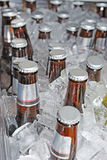 Beer bottles in the ice Royalty Free Stock Photos