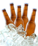 Beer bottles on ice. Five beer bottles on ice Royalty Free Stock Photography