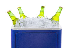 Beer bottles in ice box isolated. Closeup of an ice chest full of ice and assorted beer bottles. isolated on white Stock Image