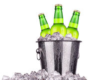 Beer bottles in ice bucket isolated. On white royalty free stock photography