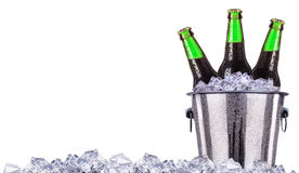 Beer bottles in ice bucket isolated on white Stock Photos