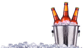 Beer bottles in ice bucket isolated on white royalty free stock photo