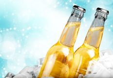 Beer bottles in ice on light background. Ice bottles beer color red yellow background Royalty Free Stock Photo