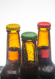 Beer bottles Stock Photos