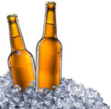 Beer bottles on white background. Royalty Free Stock Photography