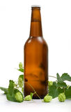 Beer and branch of hop Stock Photography