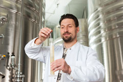 Beer brewer in his brewery examining Royalty Free Stock Images
