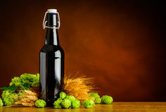 Beer Brewing with Hops and Wheat on Copy Space Royalty Free Stock Photo