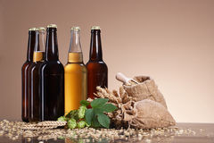 Beer and brewing ingredients. Assortment of fresh beer in bottles, ears of wheat, ripe fruit hops, wooden scoop of grain, brewing ingredients, a glass bottle royalty free stock images