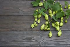 Beer brewing ingredients Hop cones on dark wooden table. Beer brewery concept. Beer background. Top view with copy space Royalty Free Stock Photos