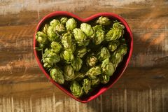 Beer brewing ingredients Hop cones in red heart bowl on wooden background. Beer brewery concept. Beer brewing ingredients Hop cones in red heart bowl on wooden stock image