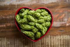 Beer brewing ingredients Hop cones in red heart bowl on wooden background. Beer brewery concept. Beer brewing ingredients Hop cones in red heart bowl on wooden Royalty Free Stock Images