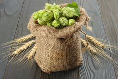 Beer brewing ingredients Hop cones in sack and wheat ears on dark wooden background. Beer brewery concept. Beer background Royalty Free Stock Photos
