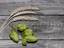 Beer brewing ingredients Hop cones in wooden board and wheat ear Royalty Free Stock Images