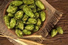 Beer brewing ingredients Hop cones in wooden bowl and wheat ears on wooden background. Beer brewery concept. Beer brewing ingredients Hop cones in wooden bowl Stock Images