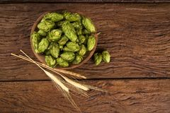 Beer brewing ingredients Hop cones in wooden bowl and wheat ears on wooden background. Beer brewery concept. Beer brewing ingredients Hop cones in wooden bowl Stock Image