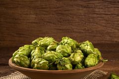 Beer brewing ingredients Hop cones in wooden bowl and wheat ears on wooden background. Beer brewery concept. Beer brewing ingredients Hop cones in wooden bowl Royalty Free Stock Photography