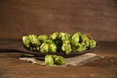 Beer brewing ingredients Hop cones in wooden bowl and wheat ears. On wooden background. Beer brewery concept Royalty Free Stock Image