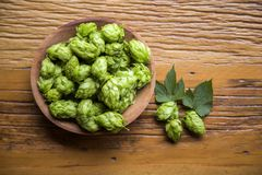 Beer brewing ingredients Hop cones in wooden bowl and wheat ears on wooden background. Beer brewery concept. Beer brewing ingredients Hop cones in wooden bowl Royalty Free Stock Image