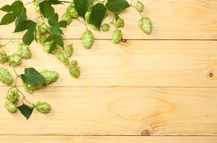 Beer brewing ingredients Hop on light wooden table. Beer brewery concept. Beer background. Top view with copy space Royalty Free Stock Photo