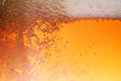 Beer bubble. Fresh golden beer bubble, close up Stock Image