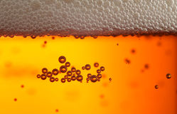 Beer bubles Royalty Free Stock Photo