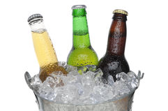 Beer Bucket with three beers Stock Images