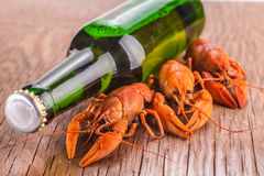 Beer and cancers. On the wooden background stock photography