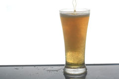 Beer. Stock Photography