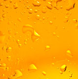 Beer closeup. Freshness gold color beer. shot in studio stock photos