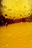 Beer and condensation Stock Image