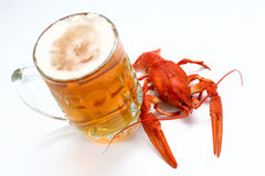 Beer and crayfish Royalty Free Stock Images