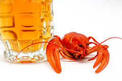Beer and crayfish royalty free stock photos