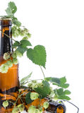 Beer decorated with Hops on white Stock Photography