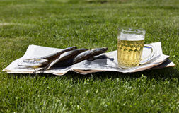 Beer with fish on grass. Stock Photography