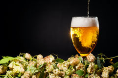 Beer flowing in glass with hop Stock Photo