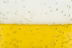 Beer Foam. In a glass, extreme close up royalty free stock images