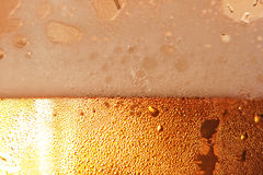 Beer foam. Stock Image