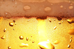 Beer with foam. Royalty Free Stock Images