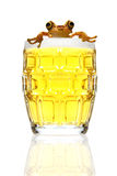 Beer and frog Stock Photography
