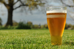 Beer in the garden. Photograph of a pint of beer taken in the garden using natural light stock photos